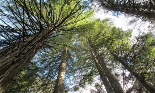 Pontos Turísticos em Canela e Gramado – Rio Grande do Sul - parque das sequoias em canelas no rio grande do sul