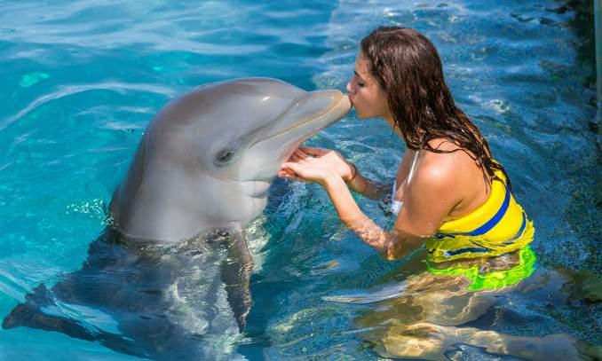 Dolphin Island Park Bavaro caps