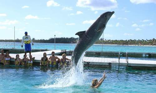 Passeios em Punta Cana  - Dolphin Island Park Bavaro