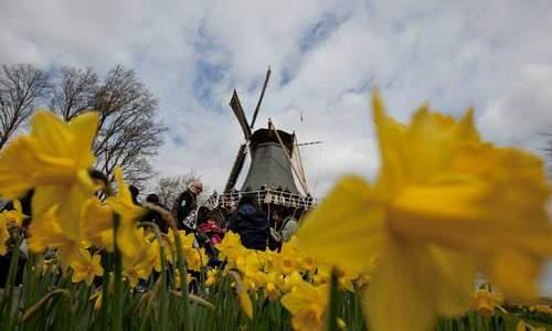 Jardim Keukenhof - O mais Bonito jardim de flores do Mundo - 02