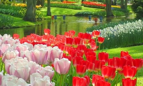 Jardim Keukenhof - O mais Bonito jardim de flores do Mundo - 04