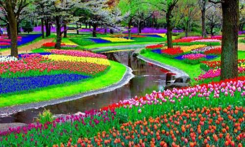Jardim Keukenhof - O mais Bonito jardim de flores do Mundo - 06