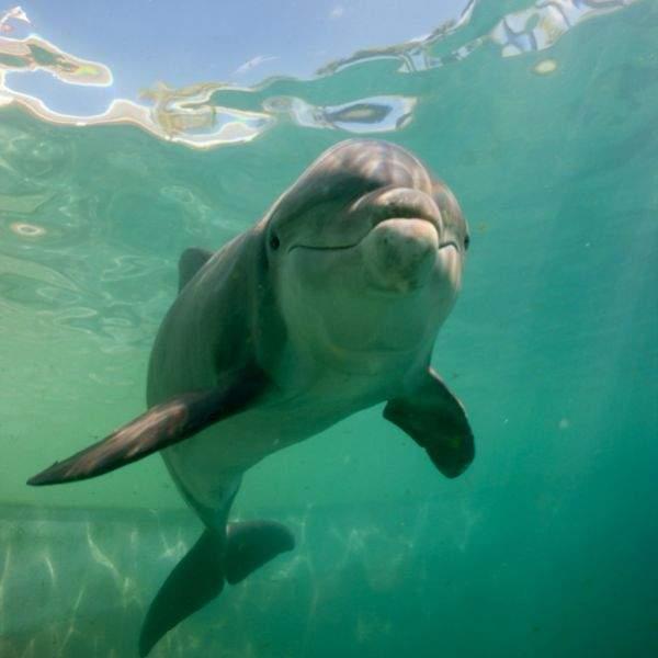 Miami Seaquarium - golfinho