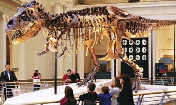 Museu Fiel de Historia Natural