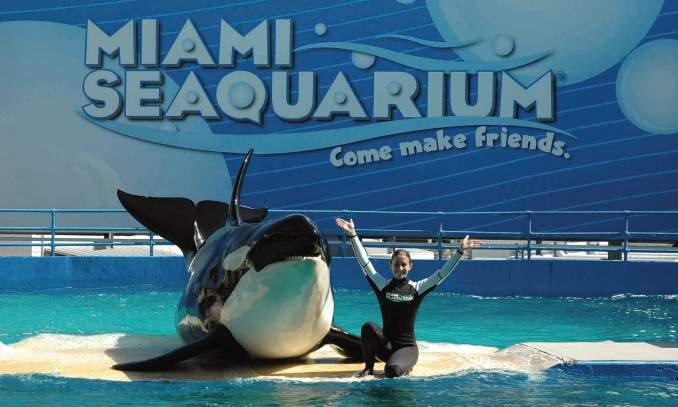 pontos turísticos em Miami - Miami Seaquarium
